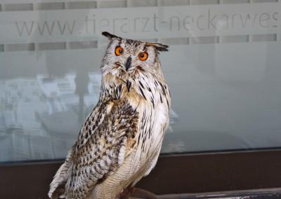 Tierarztpraxis Neckarwestheim 3