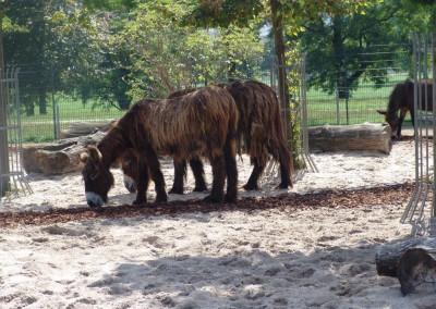 Tierarzt Neckarwestheim