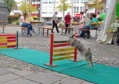 Tierarzt_Neckarwestheim_21